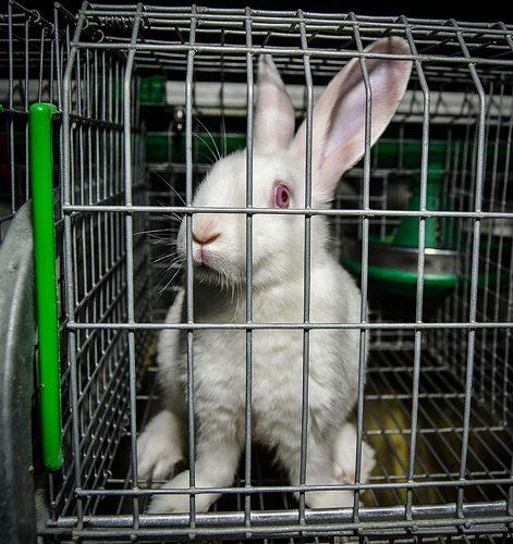 Vite Spezzate - Un'investigazione di Animal Equality