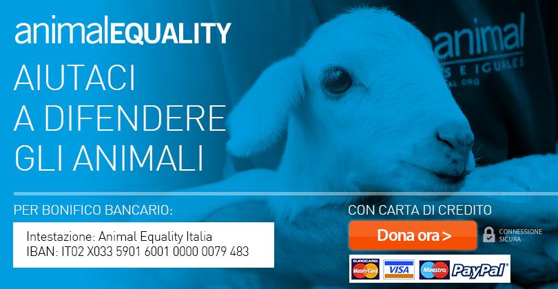Sostieni il lavoro di Animal Equality