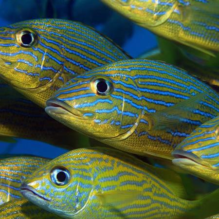 5 particolari sui pesci che vi sorprenderanno animal for Contenitore per pesci