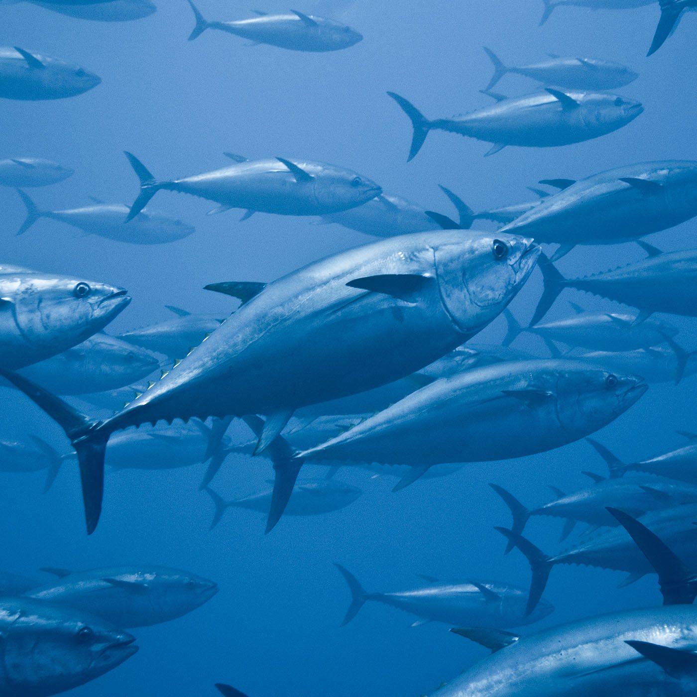 pesci a rischio
